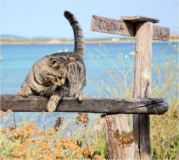 cat island in Italy