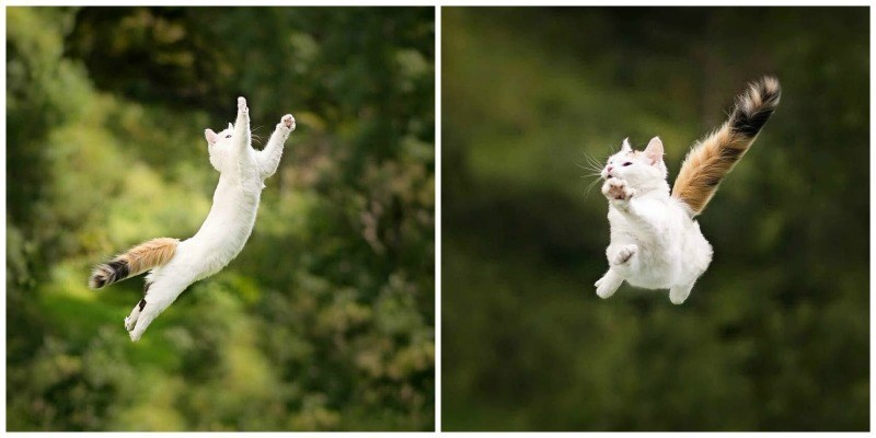cats that love to fly