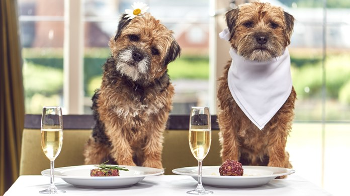 luxury hotel offers packages for dogs