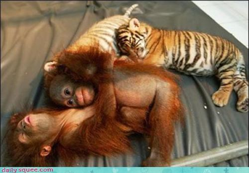 cuddle,monkey,tiger