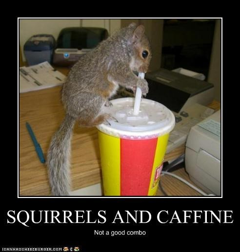 SQUIRRELS AND CAFFINE Not a good combo
