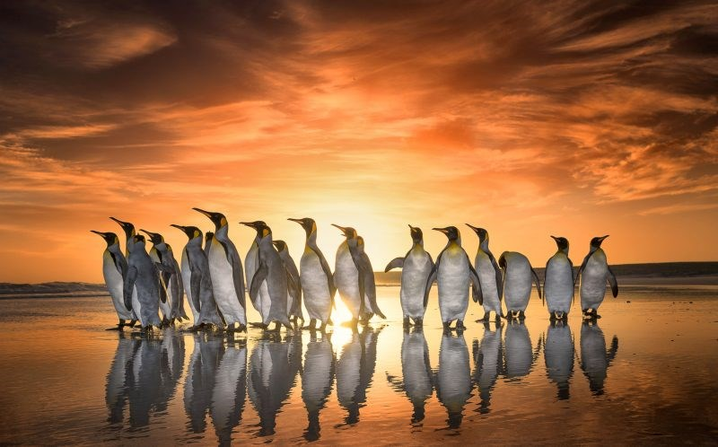 photos of penguins in sunrise