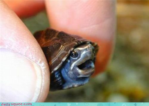face,tiny,turtle