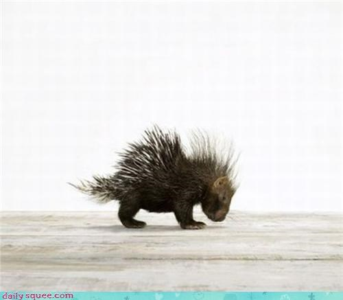 nose poopable porcupine - 3441136384