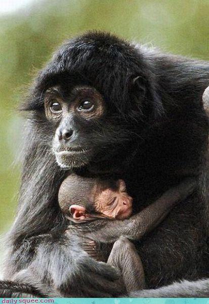 face monkey mother - 3441137152