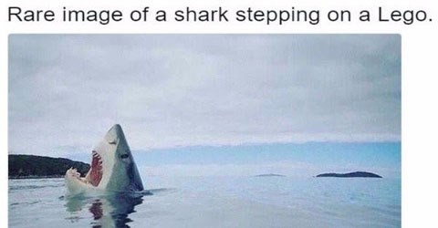 Funniest animal memes on the internet | Animal - Rare image shark stepping on Lego.