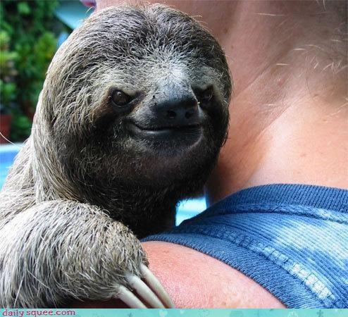 face,sloth,squee spree