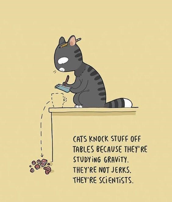 hilarious comics any feline lover would appreciate