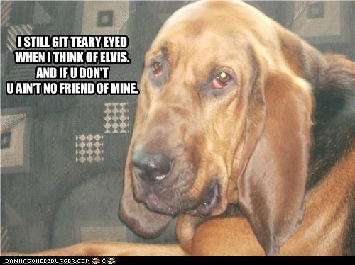cry Elvis hound dog hound mix Sad song