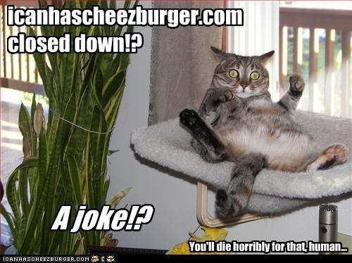 Cheezburger Image 3442862336