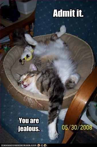 bed jealous lazy nap - 3442882560