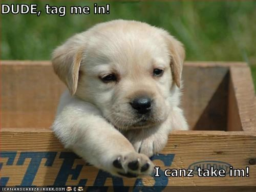 box,golden retriever,puppy,sports,tag
