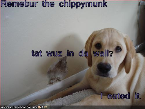 Cheezburger Image 3444416512