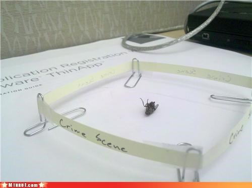 art awesome awesome co-workers not boredom bug clever creativity in the workplace crime scene cubicle boredom Death depressing diorama fly gross housefly insect mourning reenactment Sad sass sculpture wasteful wiseass - 3445065216