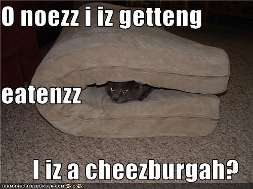 Cheezburger Image 3445496832