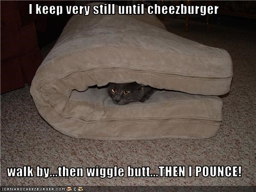 Cheezburger Image 3446295040