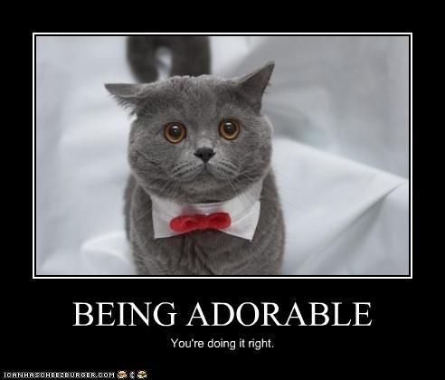 adorable bowtie costume cute doin it rite - 3446494208