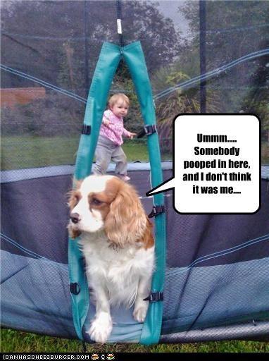 blame,cavalier king charles spaniel,human,poop,trampoline