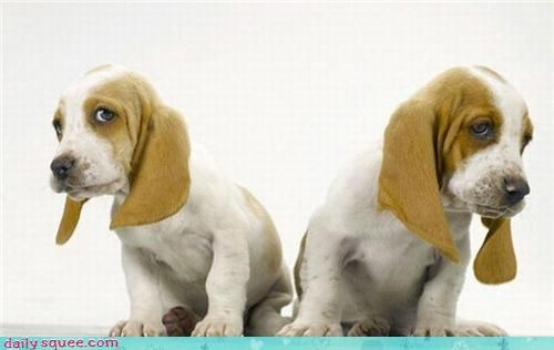 dogs puppy twins - 3448307200