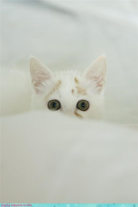 fluff kitten tiny - 3448314368