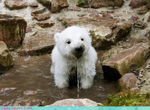 noms polar bear water - 3448316416