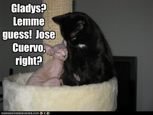 Gladys? Lemme guess! Jose Cuervo, right?