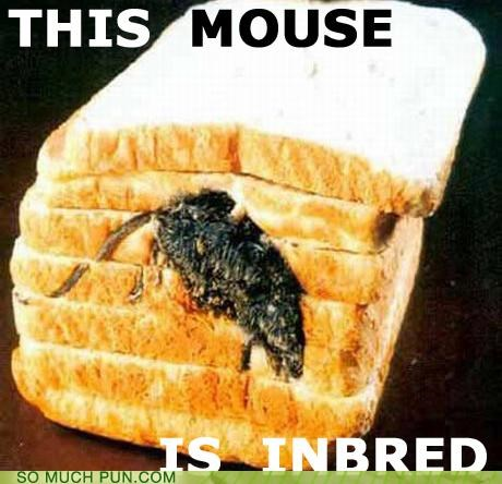 bread food going to be sick mouse - 3448488704