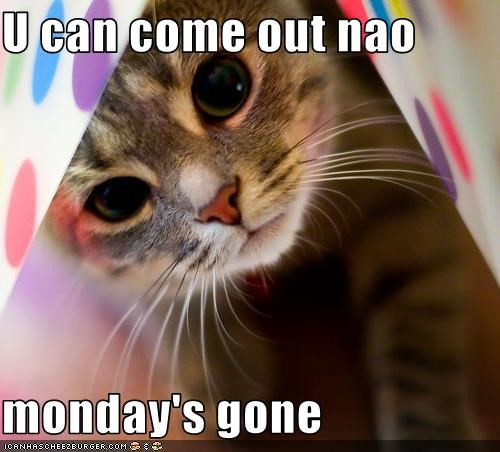 care,cute,lolkittehs,mondays