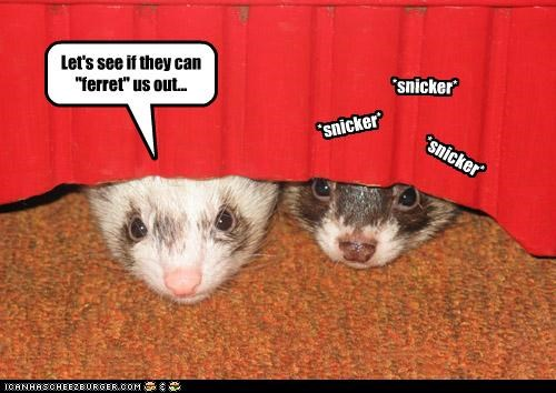 "Let's see if they can ""ferret"" us out... *snicker* *snicker* *snicker*"