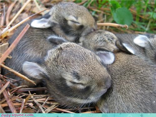 bunny sleepy squee spree - 3449005312