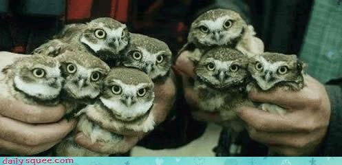 face family Owl - 3449238016