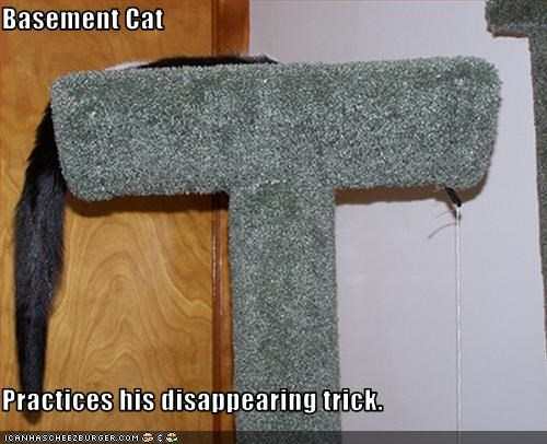 Basement Cat  Practices his disappearing trick.