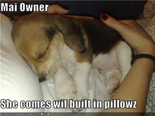 beagle,comfortable,human,pillows,puppy,sleep,snuggle