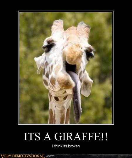 wtf,giraffes,broken,animal
