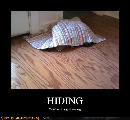 cat doing it wrong hiding - 3451245568