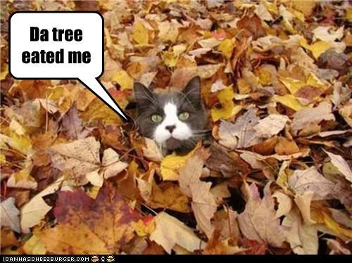 cat eated leaves tree - 3451912448