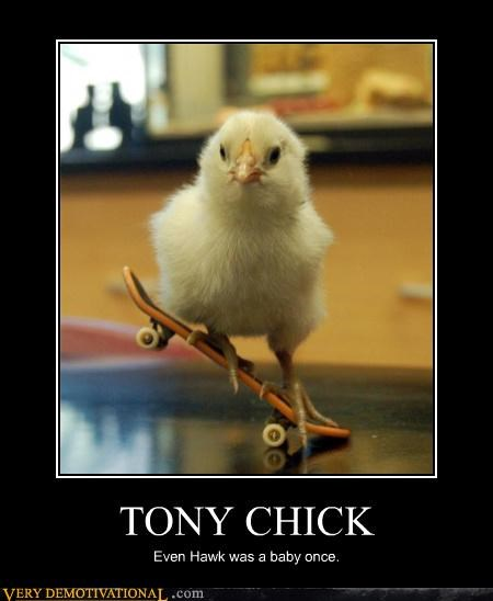 TONY CHICK Even Hawk was a baby once.