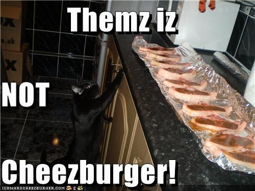 Cheezburger Image 3452355840