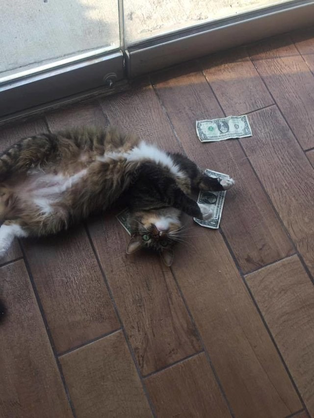 a funny story on a cat bring home the money