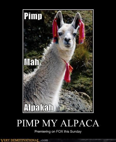 wtf,alpaca,pimp my ride