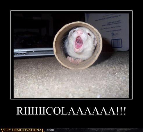 ferret,ricola,yelling