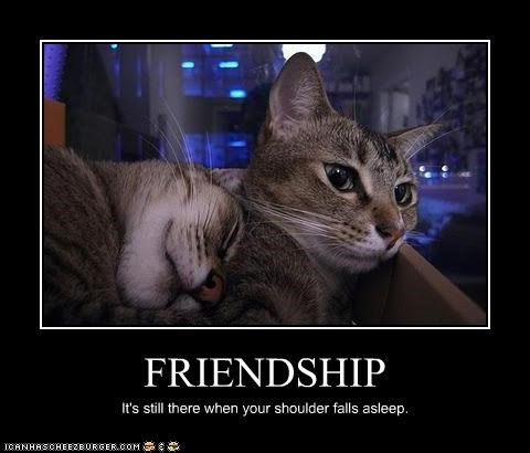 Cats,friendship,sleep,snuggle