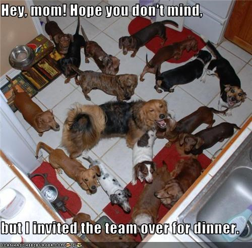dachshund,dinner,golden retriever,Hey,hope-you-dont-mind,invited,jack russell terrier,mixed breed,mom,team