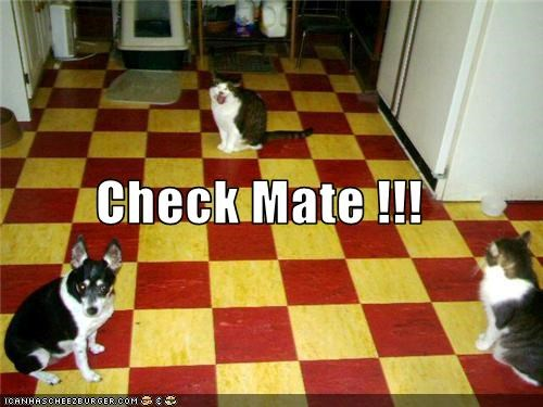 Cats checkmate chess dogs floor tile - 3454871296