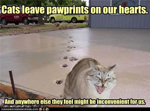 adage,caption,captioned,cat,hearts,inconvenient,leaving,love,paw,pawprints,prints