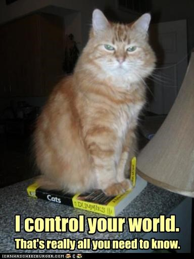 best of the week,book,caption,captioned,cat,Cats,control,fact,for dummies,Hall of Fame,need to know,tabby,world