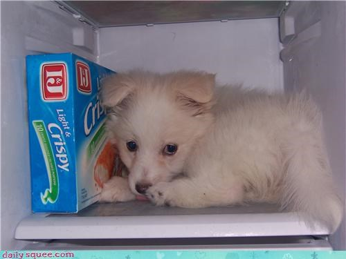 cute freezer puppy - 3455788288