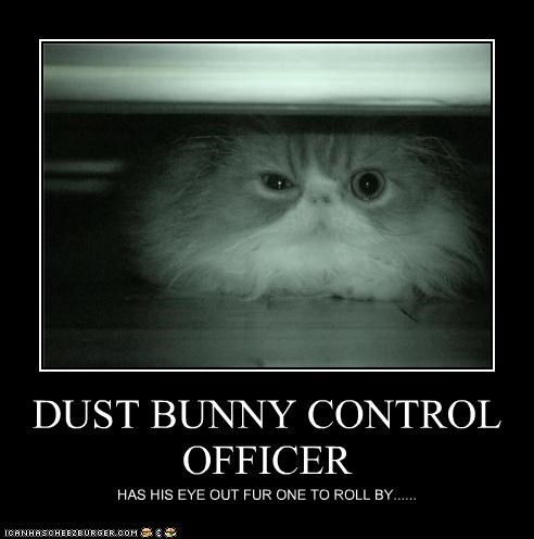 bunny caption captioned cat control dust Hall of Fame job officer position - 3455835392