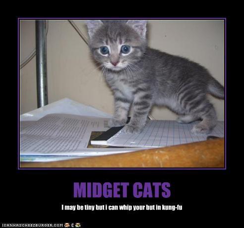 midget cats i can has cheezburger
