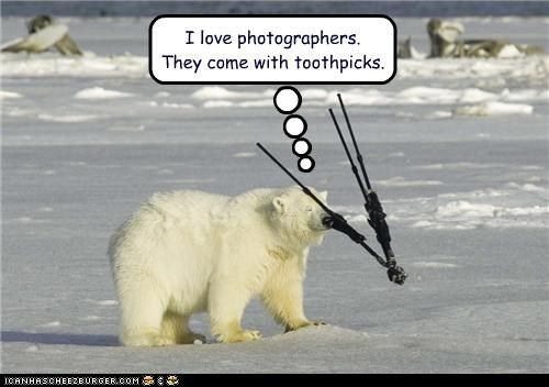 bear,camera,caption,captioned,equipment,happy,love,photographers,pleased,polar bear,toothpick,toothpicks,tripod